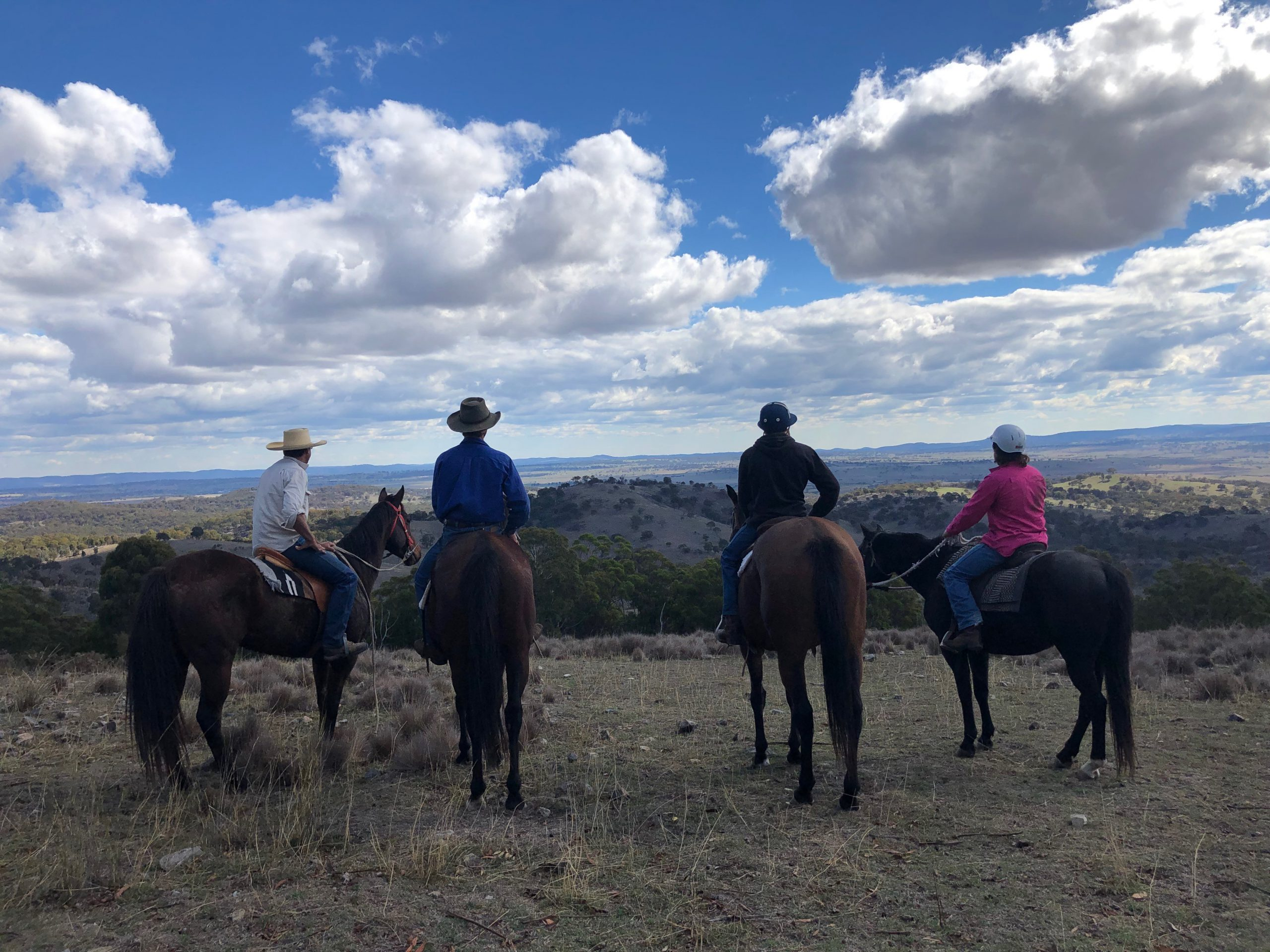 Retired Racehorses Helping Troubled Teens Get Back On Track