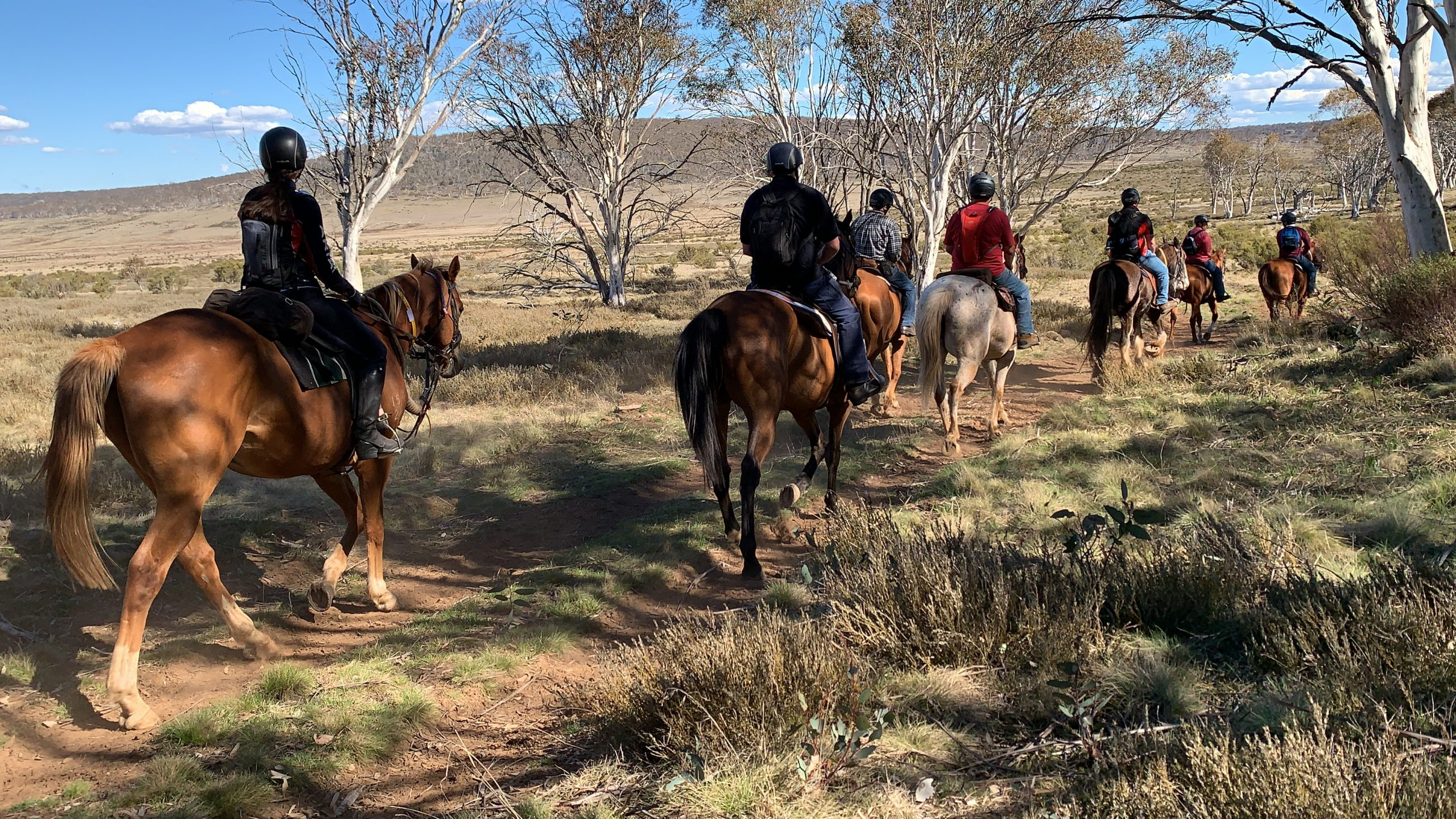 Veterans Riding To Recovery On Retired Racehorses