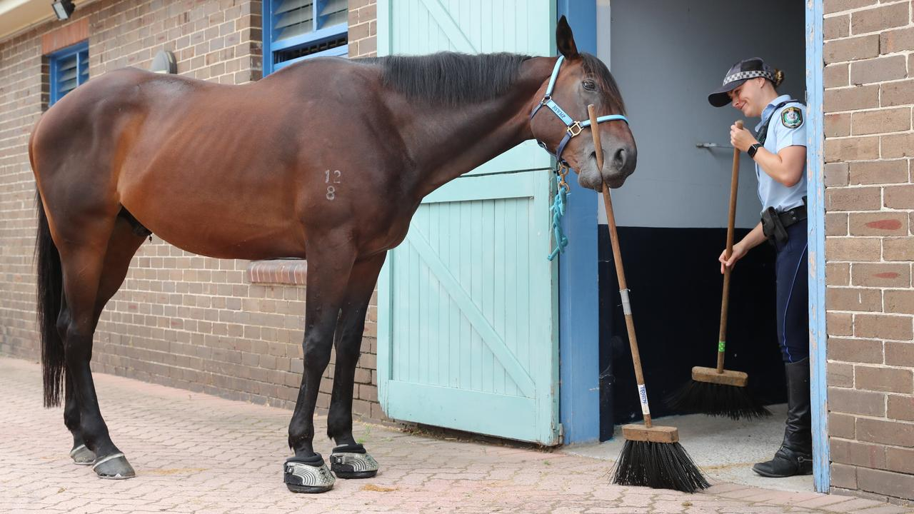 New NSW Mounted Police Horse Cleans His Own Stable